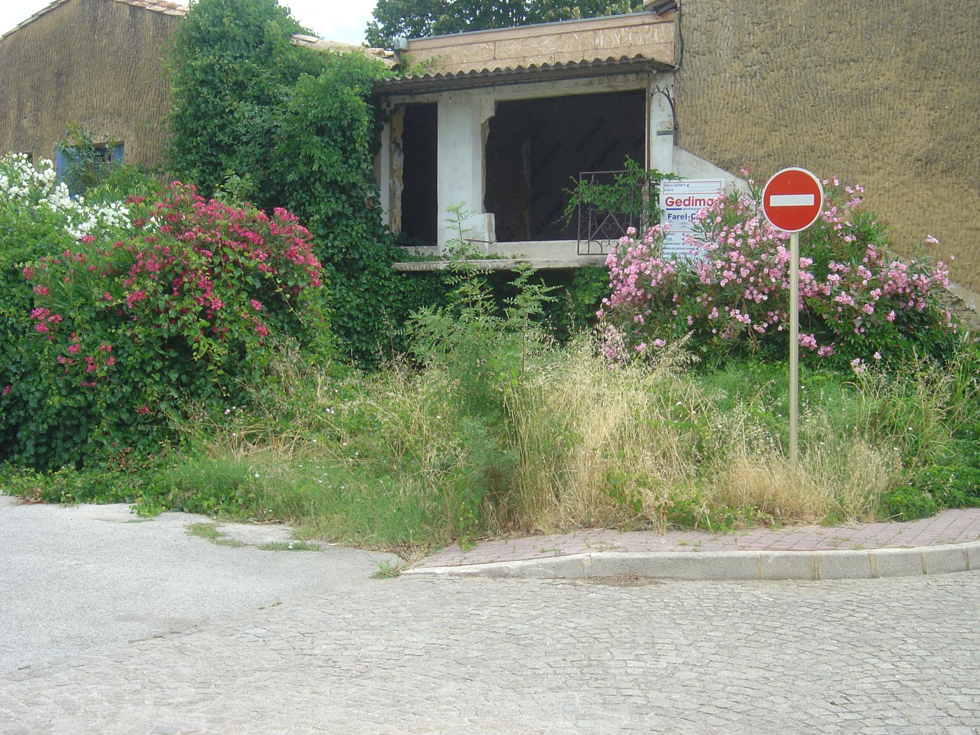 herbes  folles rue du pont