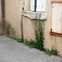 ornement naturel rue basse